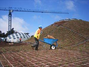 A construction worker from the new California Academy<br> of Sciences, located in San Francisco's Golden Gate<br> Park, transports a portion of the 1.7 million native plants<br> and wildflowers.  Scheduled to open in Fall 2008,<br> the California Academy of Sciences museum <br>will feature the state's largest living roof.