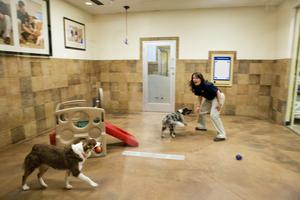 Petsmart petshotel r offers five star accommodations for for Dog friendly hotel nyc