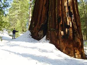 Yosemite winter snowshoe