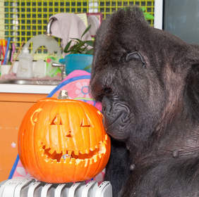 Koko cuddles with winning carved pumpkin.