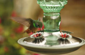 Perky-Pet® Brand wild bird feeders since 1958.
