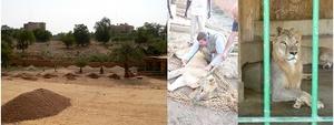THL Lion Habitat Niger