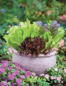 patio garden, patio gardens, conatiner garden, container gardening, patio plants,
