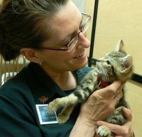 Tyna Ruszczyk, PetCare Manager, holds a kitten in PetSmart Charitiesÿ¿ÿ¿ adoption centre.