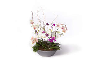 Orchids make an elegant statement in any workplace.