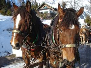 Christmas Sleigh Ride with Viator.com