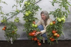 gardening, new garden gear, new plants for 2011, what's new in gardening
