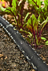 garden, watering, drought, watering in a drought, soaker hose, hose, water-wise
