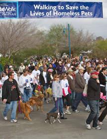 pets, walk, charity, charities, dog, cat, non-profit, animal welfare