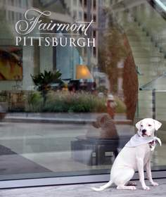 Edie, Official Canine Ambassador at Fairmont Pittsburgh