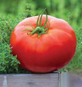 Big Daddy tomato, Burpee, new tomato, tomato seed