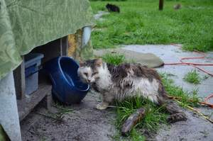 cat, emergency relief, donate