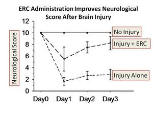 Endometrial Regenerative Cell (ERC) Stem Cell Administration Reduces Neurological Damage in Brain Injury Model