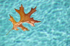 Fall pool maintenance and leaf-cleaning tips