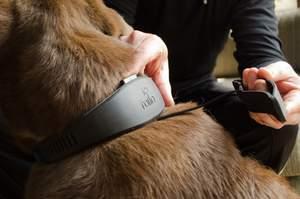 Rollo Dog Collar