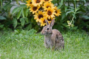 Photo of rabbit in landscape