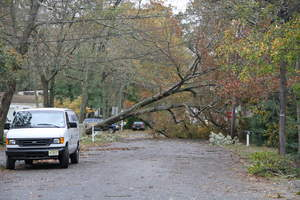 Fallen trees are a major source of power outages after a storm.