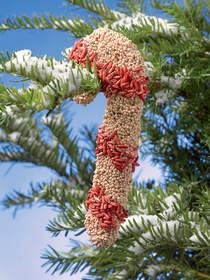 holiday gifts, songbird tweets, backyard birdfeeders, gifts for gardeners