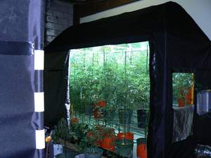 HY-POD TEK's Indoor Grow POD at Work Controled From Mobile Device