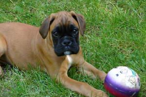 Canine Parvovirus, Puppy Parvo, Puppy Illnesses