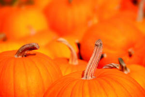Fall events in Northern Virginia