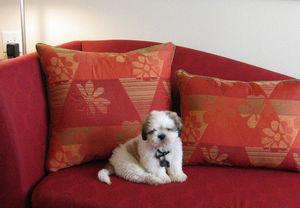 Pet friendly hotels in Aventura Florida