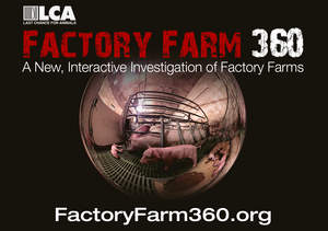A 360-view of factory farming, from the animals' eyes