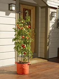 how to grow tomatoes, tomato growing, grow bag kits