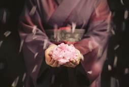 Sakura Season in Kyoto, Tokyo and Osaka