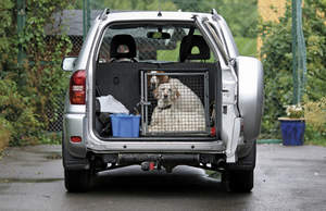 Dogs in kennel traveling in a car