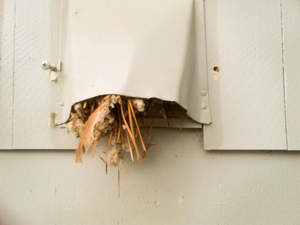 Bird's nest readily visible from the outside dryer vent. (courtesy of Dryer Vent Wizard)