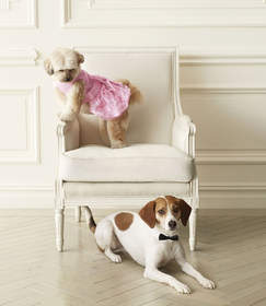 dogs on furniture wearing clothing
