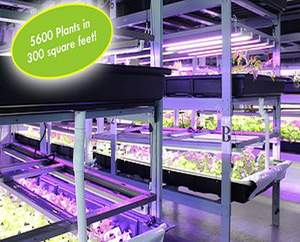 Acopia Harvest hydroponic Rentafarm(TM) produces healthy and nutritious herbs and vegetables without toxic chemicals or pesticides -- 52 weeks a year!