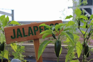 Jalapenos from the hotel gardens are used in cocktails and tempting punches from 15th-floor Punch Room.