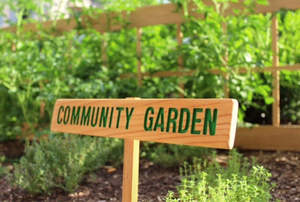 Hotel neighbors visit the front drive Community Garden to snip herbs for their own home cooking.