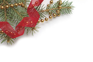 Pine tree branch with ribbon