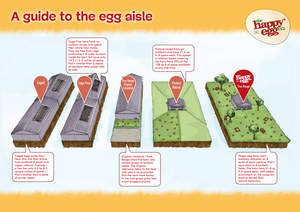 Infographic provided by happy egg co.