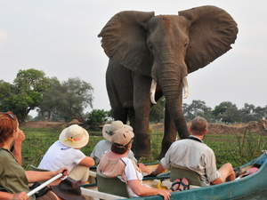 Specialty guides help adventurers get to the right places at the right times such as these travelers who are immersed in the environment as they canoe the Zambezi River in Mana Pools National Park, Zimbabwe.