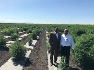Mr. Raymond C. Dabney & Chief William Bills at the CBIS/FSO NAC 250-Acre, Industrial Hemp Research Project In San Joaquin Sovereign Tribal Free Land MBS, California